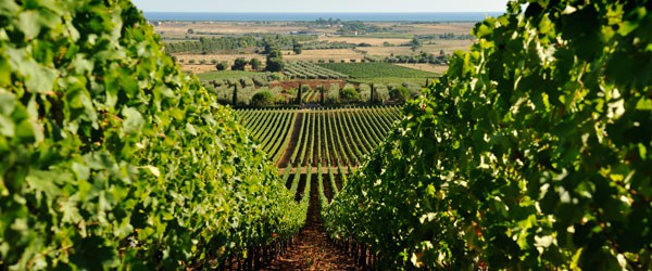 MaremmaWine-Maremma+Wine+Route+-Water,+Colors+and+Marvels-