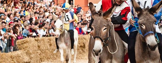 Donkey+Race+Palio,+Piedmont