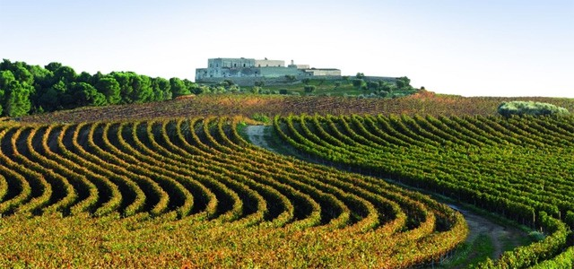 Colli Perugini vineyards - image from umbriatasty.it