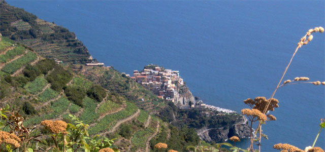 The 'cian' terraces and Manarola, photo by William Domenichini