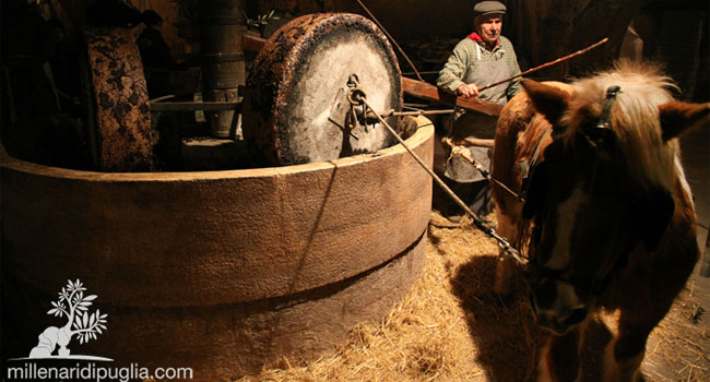 Ancient olive oil mill - image by Millenari di Puglia
