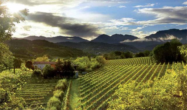 Private Tours in the land of Prosecco