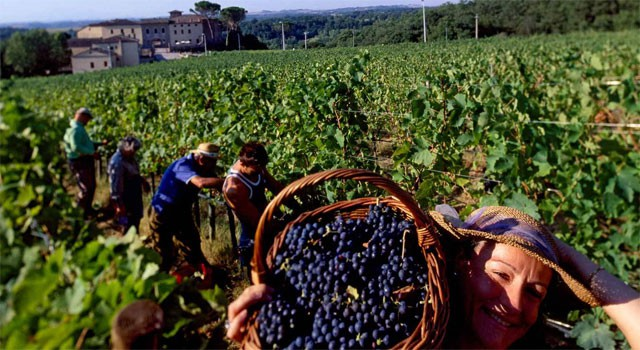 Fall grape harvest, a typical seasonal activity – image from olioevino.org