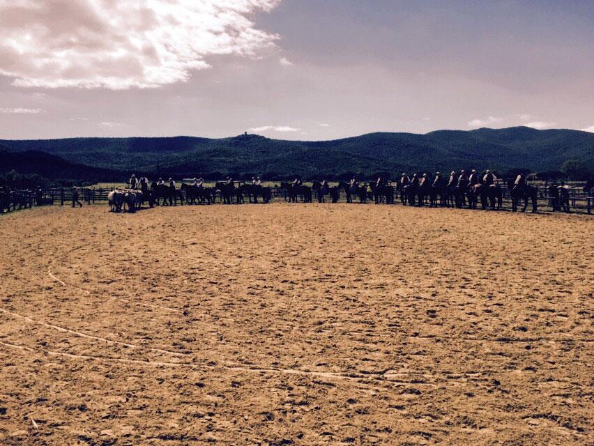 Maremma Butteri Cowboys