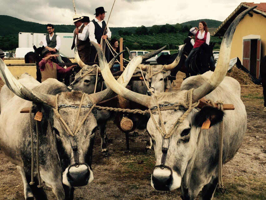 Cowboys & traditions in Maremma Tuscany