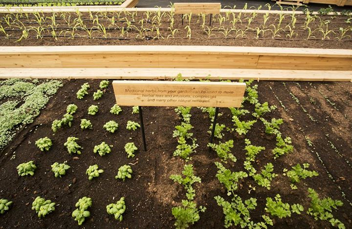 The Slow Food Garden at Expo Milano 2015