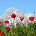 Abruzzo's beautiful natural landscape