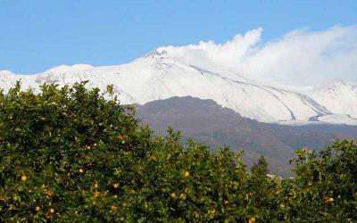 The colors of Winter: Lemon Harvest on Citrus Island