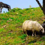 Sicily's nature in the countryside