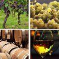 Italy wine experiences