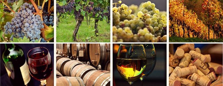 Italian wine: 2016 harvest & vintage experiences