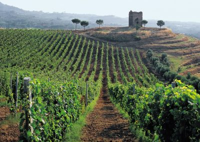 The Castelli Romani villages and vineyards