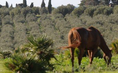 Overtourism Awareness Month