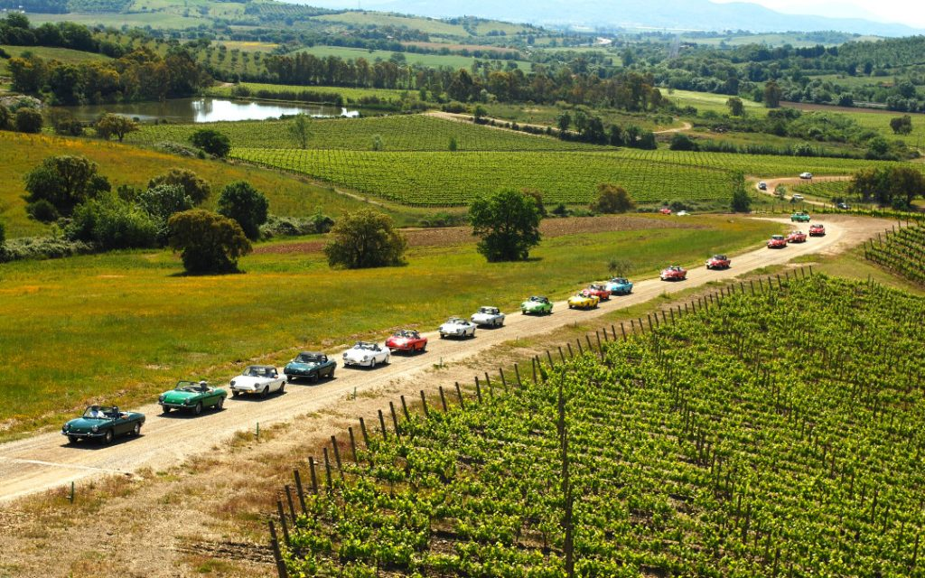 vineyarding team building wine italy