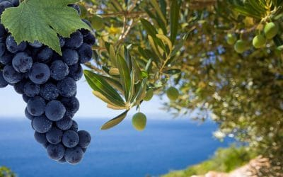 'Olive Oil & Wine' Virtual Team Building Experience